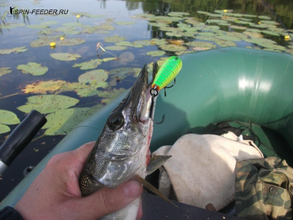 когда лучше клюет рыба