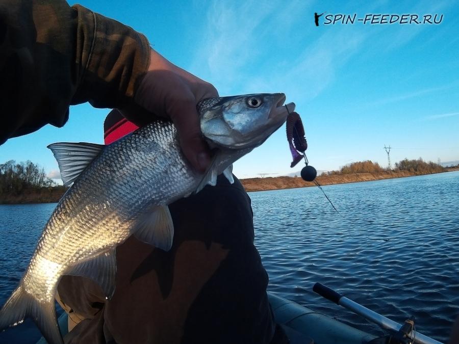 рыбалка в верховьях вятки
